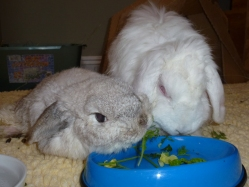 Baxter & Scootie sharing a salad